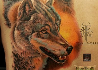 color wolf close up 2016