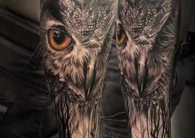 owl dark forest 2018