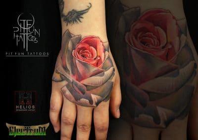 white rose 2017